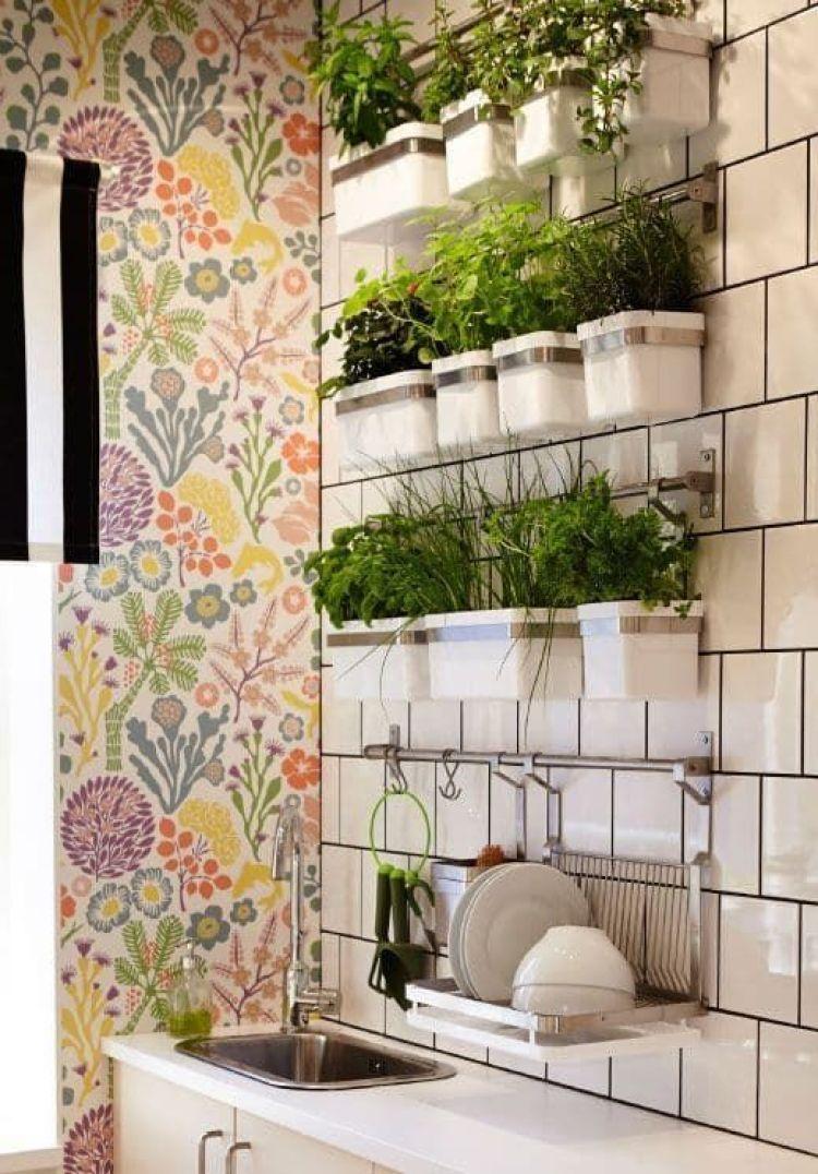Horta na cozinha com vasos brancos.