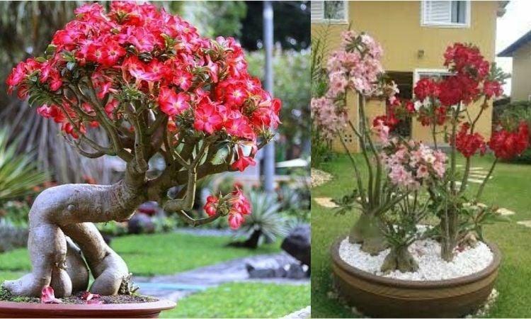 jardim decorado com flores
