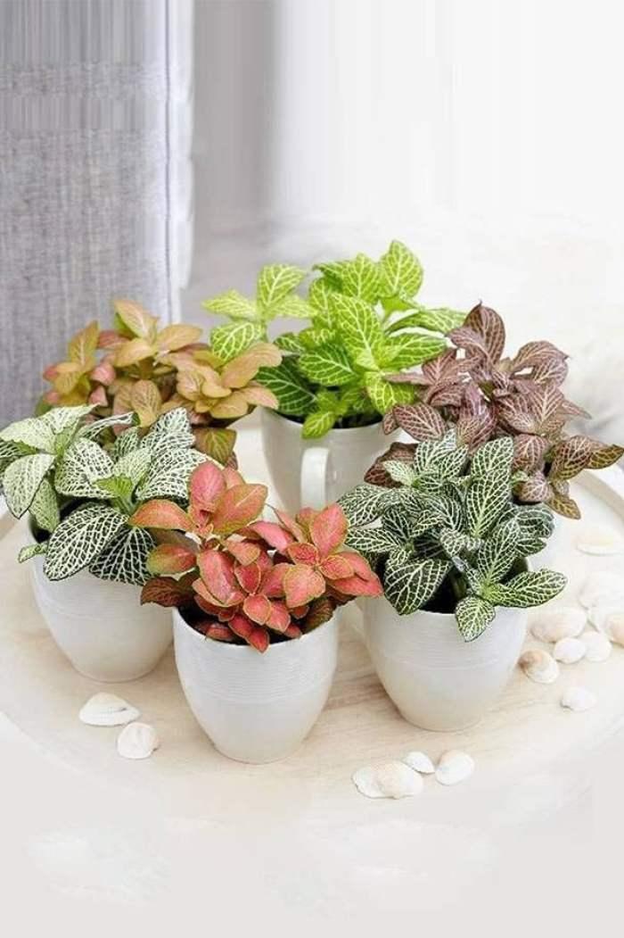 Plantas coloridas para banheiro.