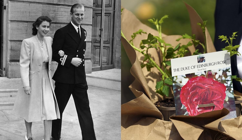Rainha Elizabeth II, Príncipe Philip e rosa em sua homenagem.