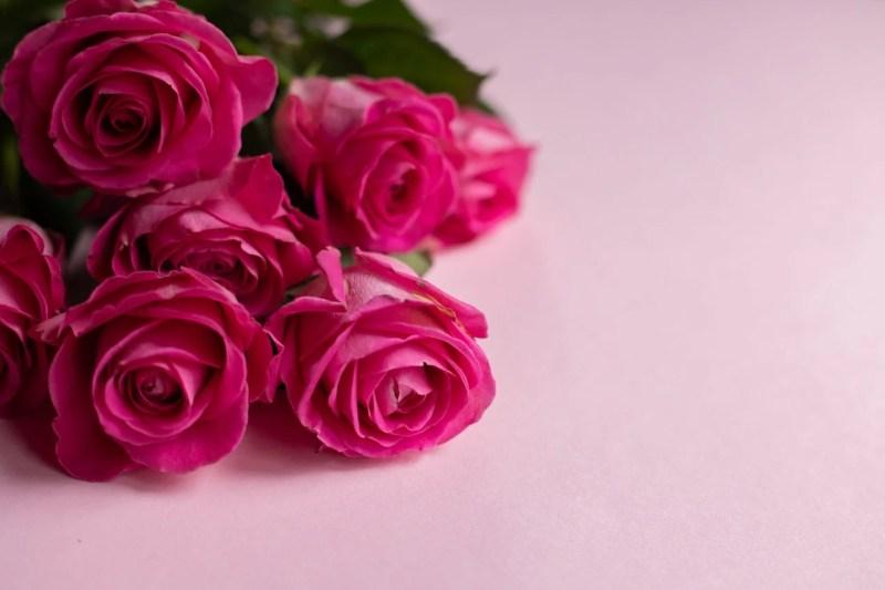 Rosas de Dia dos Namorados.