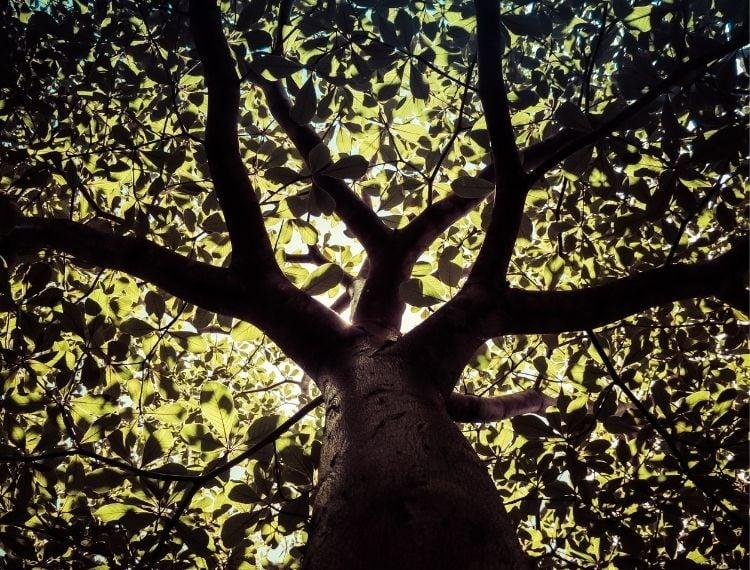 Foto de copa de árvore vista de baixo, Dia da Árvore no calendário de setembro