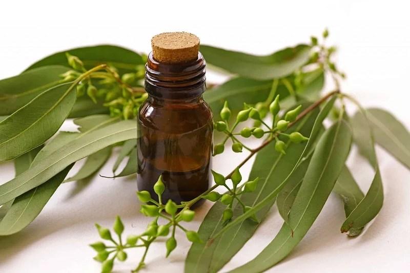 Folhagem de eucalipto junto com frasco com óleo