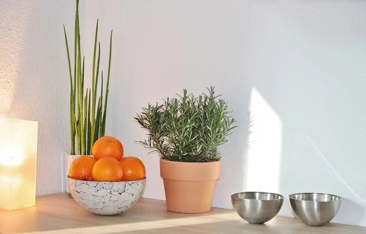 Foto de bancada de cozinha com vaso de alecrim