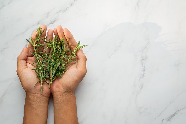 Foto de mãos segurando ramos de erva