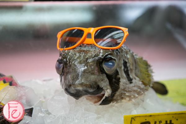 blowfish/ fugu