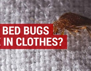 5 Reasons to Invest in Professional Pest Control