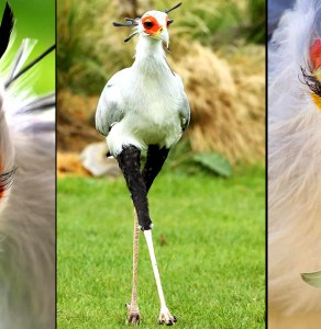 PICS: See The 2nd Most Stylish Bird In The World, And It Can Only Be Found In Africa