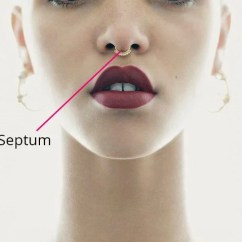 Cartilage Piercing Diagram Dog Parts Getting A Know This First Septum Nose