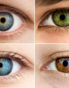 All about the human eye color chart also rh fashionlady