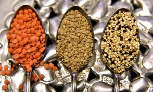 lentils as plant protein