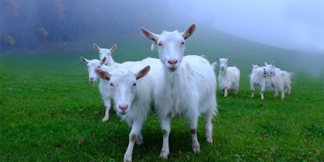 LediBelle - nachhaltige Pflege für empfindliche Haut aus der Schweiz