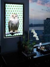 """SNOWY OWL"" BY ROBERT WILSON"