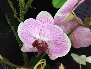 orchids apr 2014 (5)