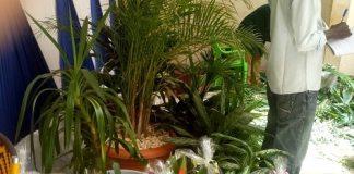''Folie-floral'' -propose-des-fleurs-naturelles