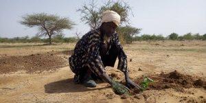 Lutte-contre-la-désertification-Essakane-renforce-la-foret-de-Goulgountou-avec-950-plants