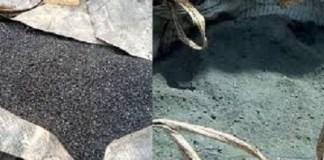 Affaire-charbon-fin-les-avocats-de-la-défense-se-disent-serein