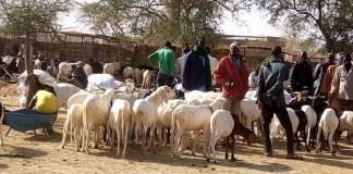 Foire-de-vente-des-petits-ruminants-au-Yagha-Un-cadre-idéal-pour-faire-des-bonnes-affaires