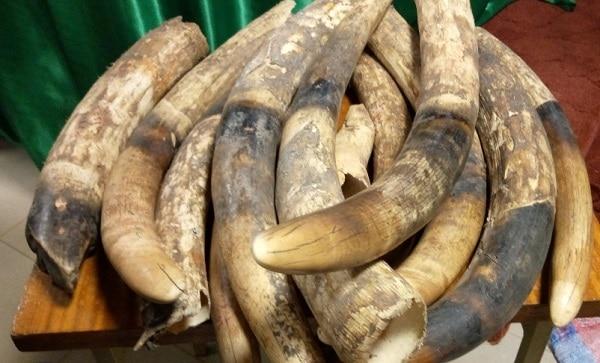 Trafic-d-ivoires-au-Burkina