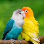 5d Fugle, Dyr, Diamond Maleri Diamant Mosaic