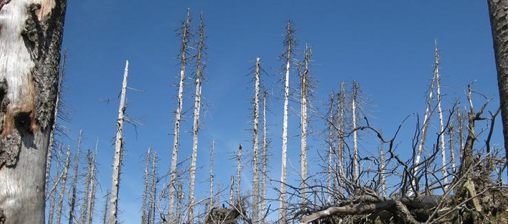 Climate change emergency tree removal Atlanta Ga