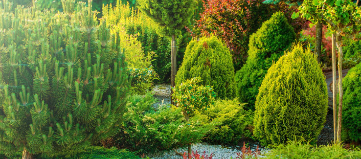 Home garden landscape with healthy trees and shrubs