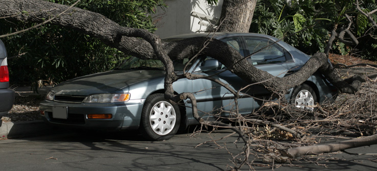 City tree falls on parked car in public right of way