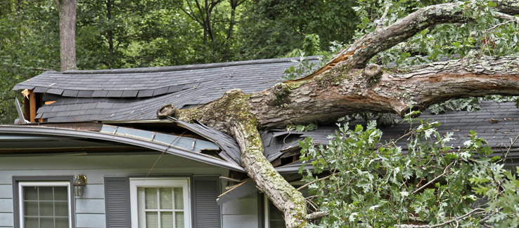 A Tree Fell on My House, What Now? – Fast Tree Removal Services ...