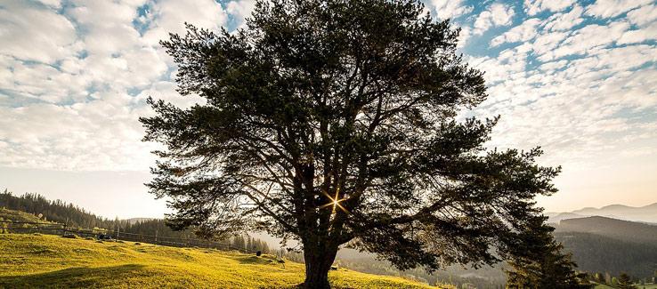 Healthy tree growing in fertilized soil
