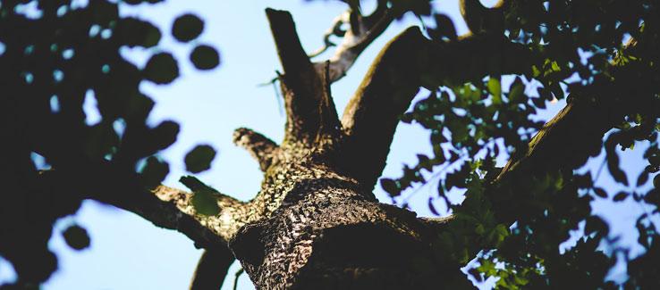 Tree dieback problems and solutions in Atlanta Ga