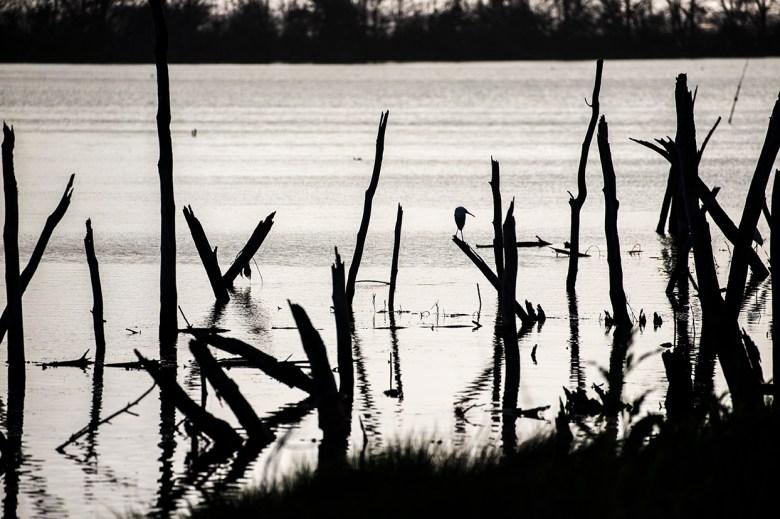 Gull Lagoon