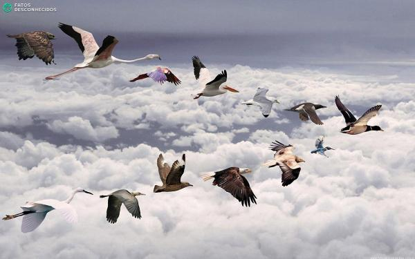 Love-Birds-Migration-Above-Clouds-Hd-278933