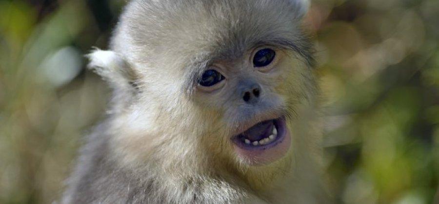 Preferência 10 animais exóticos e impressionantes que você precisa conhecer! HS06