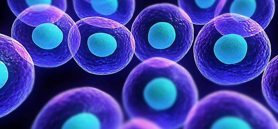 principais funções das células