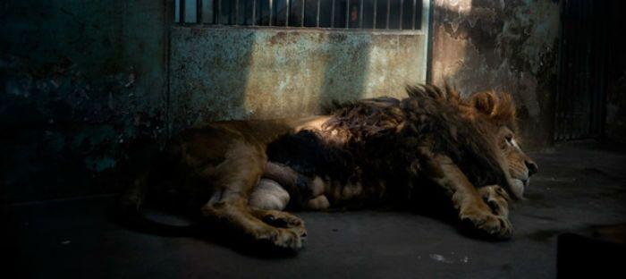 21 registros da realidade triste e perturbadora dos zoológicos chineses