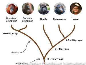 great_ape_tree_crop-300x226