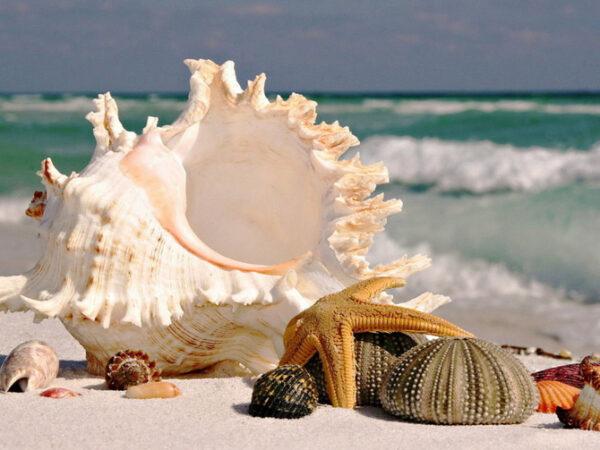 sea_treasures_(1)