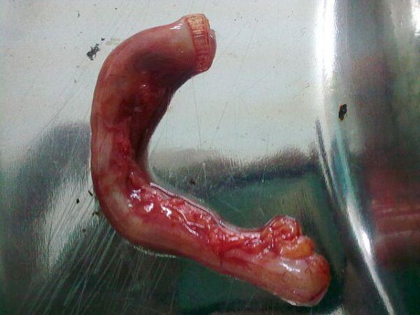 640px-Jpeg.appendix