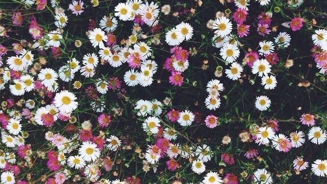 5 flores assassinas que você provavelmente tem em sua casa