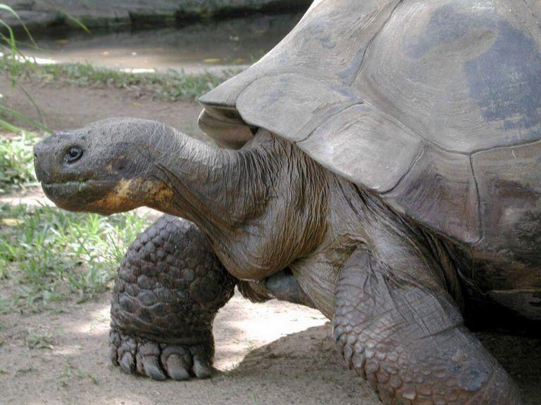 Como é uma tartaruga por dentro?