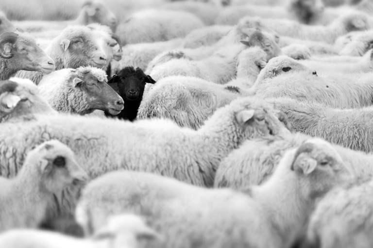 9 provas que você é a ovelha negra da sua família