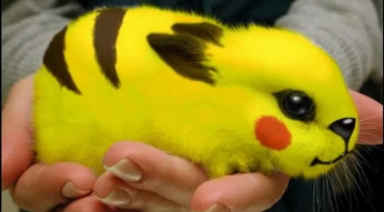 Como seriam os Pokémon se eles na verdade fossem animais?