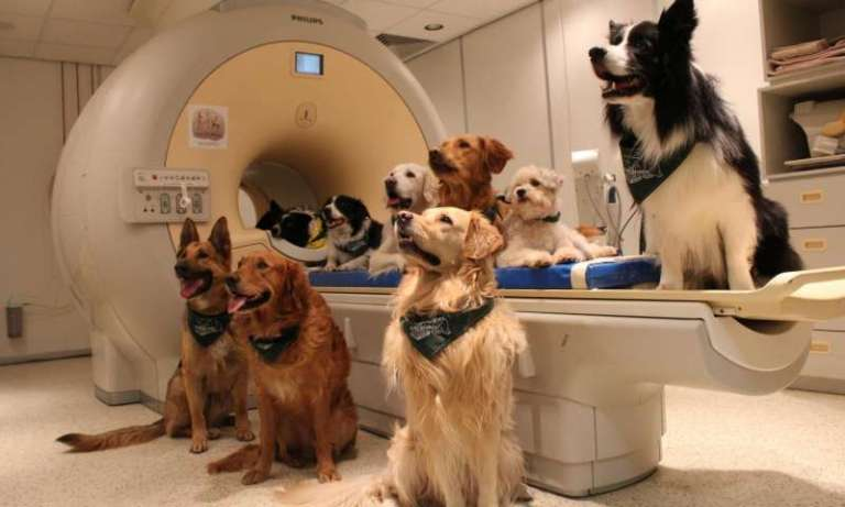 Cientistas comprovaram que os cães entendem cada palavra que pronunciamos