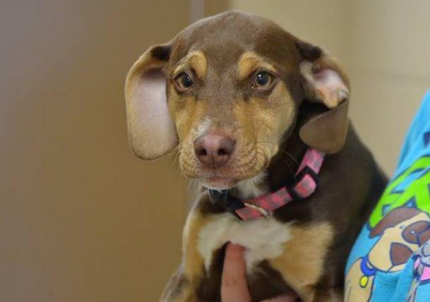 Esse cachorrinho salvou uma menina de 3 anos que saiu sem roupas no inverno
