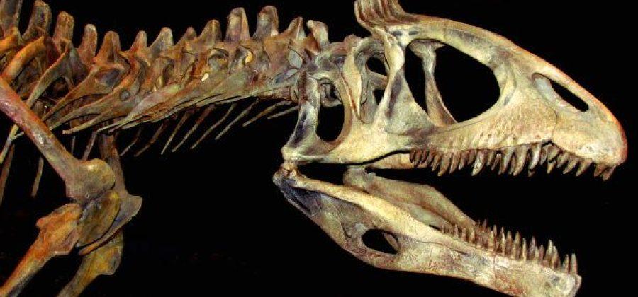 10 dinossauros mais estranhos da história do planeta 9f5fba99280