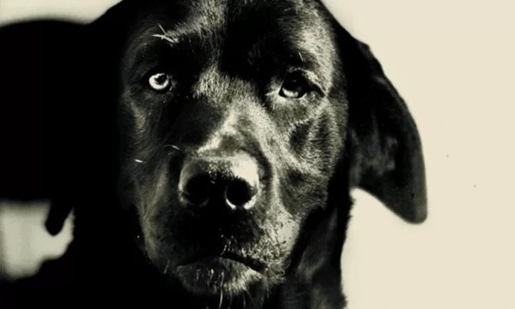 """A história por trás da foto deste cachorro """"assassino"""" na prisão vai tocar o seu coração"""