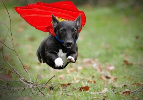 12 vezes em que animais surpreenderam humanos com seus atos heróicos