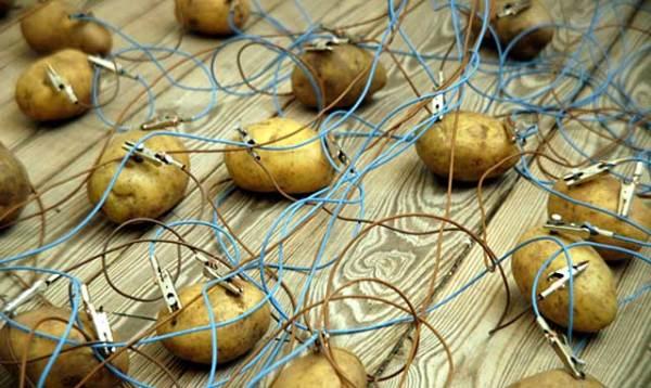 Make Your Own Potato Lightbulb 02 600x358, Fatos Desconhecidos