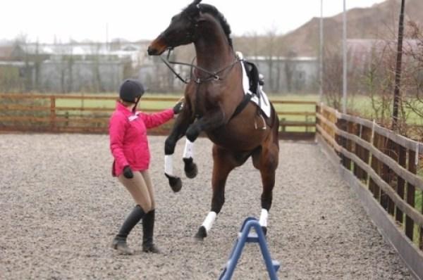 Resize 500x332 Cavalos Bravos E Ansiosos, Fatos Desconhecidos