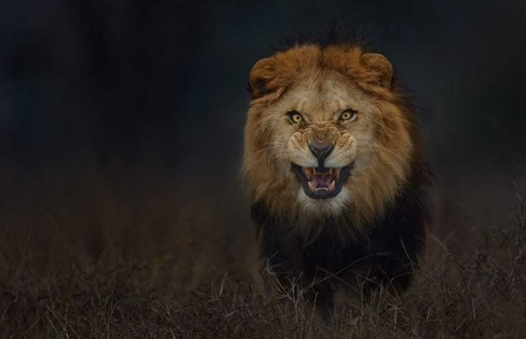 13 maneiras de sobreviver a um ataque de um animal selvagem